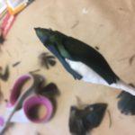 plumes faisan Mary Colibri